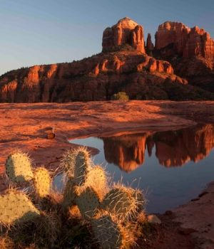 21 cactus and Cathedral Rock reflection