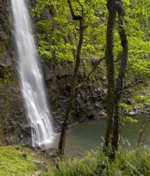 50 kauai paradise