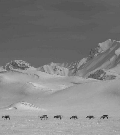 caribou crossing Divide