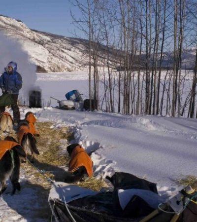 resting dogs near Yukon